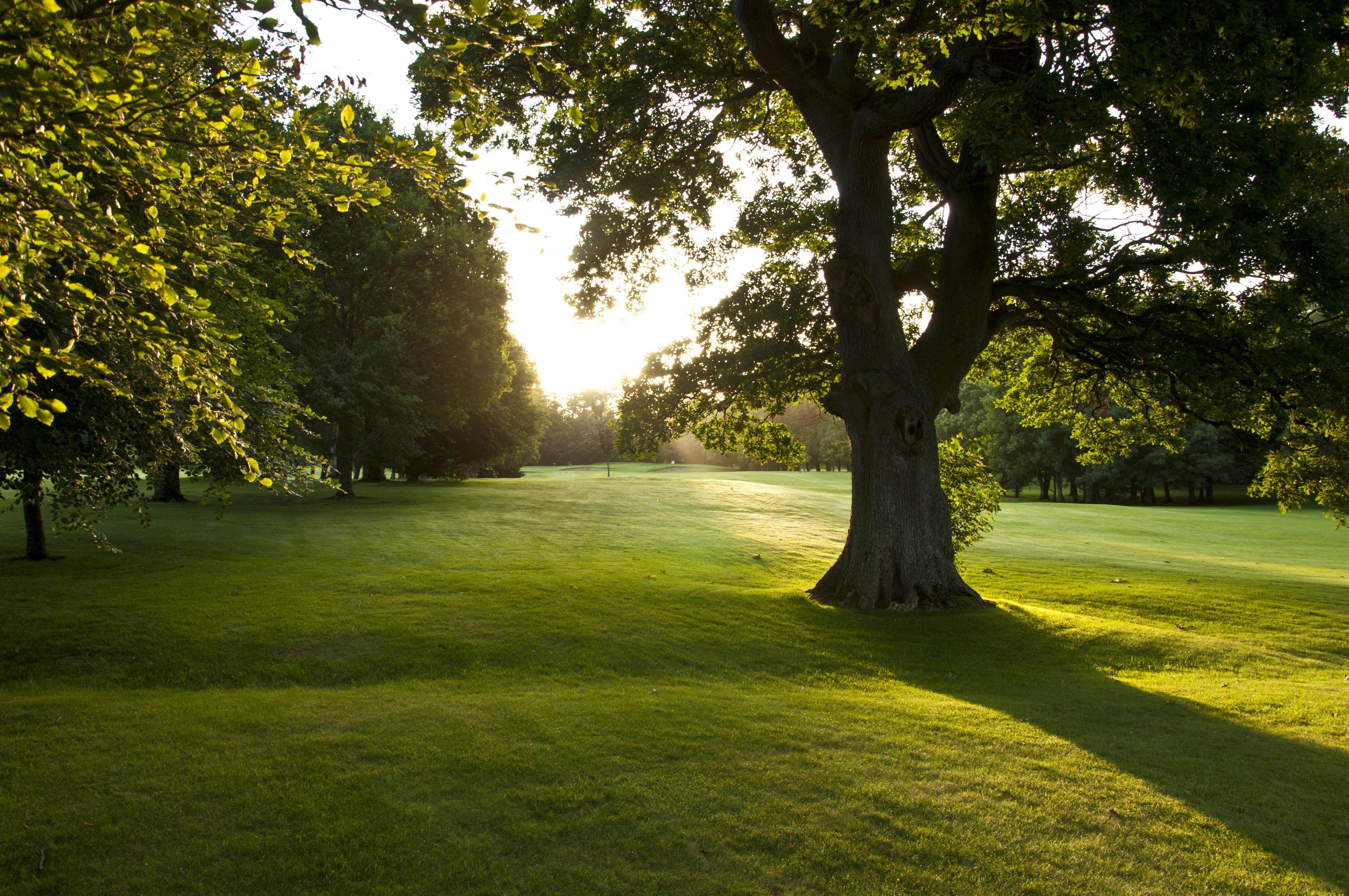 12th tree sunrise 2