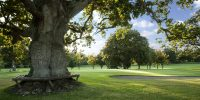 hole-with-tree-seat